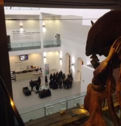 The Atrium, Ulster Museum