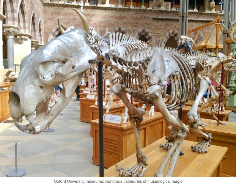 Oxford University museums: fantasy cathedrals of museological magic